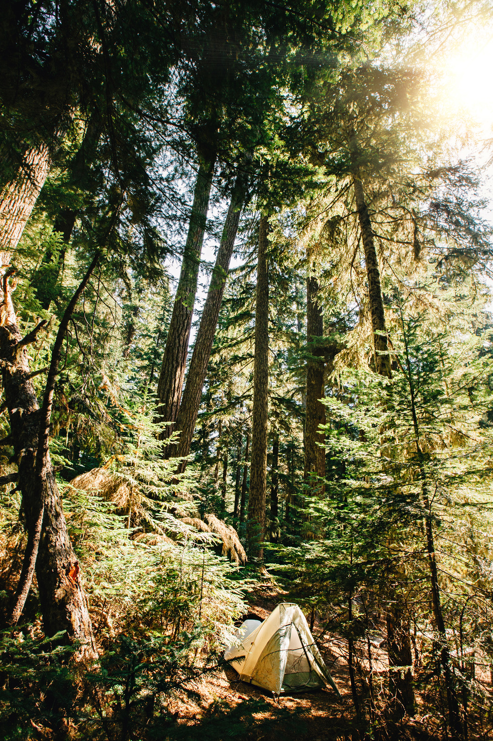 CindyGiovagnoli_MountRainier_Olympic_NationalPark_HohRainforest_Washington_MRNP_Camping-002.jpg
