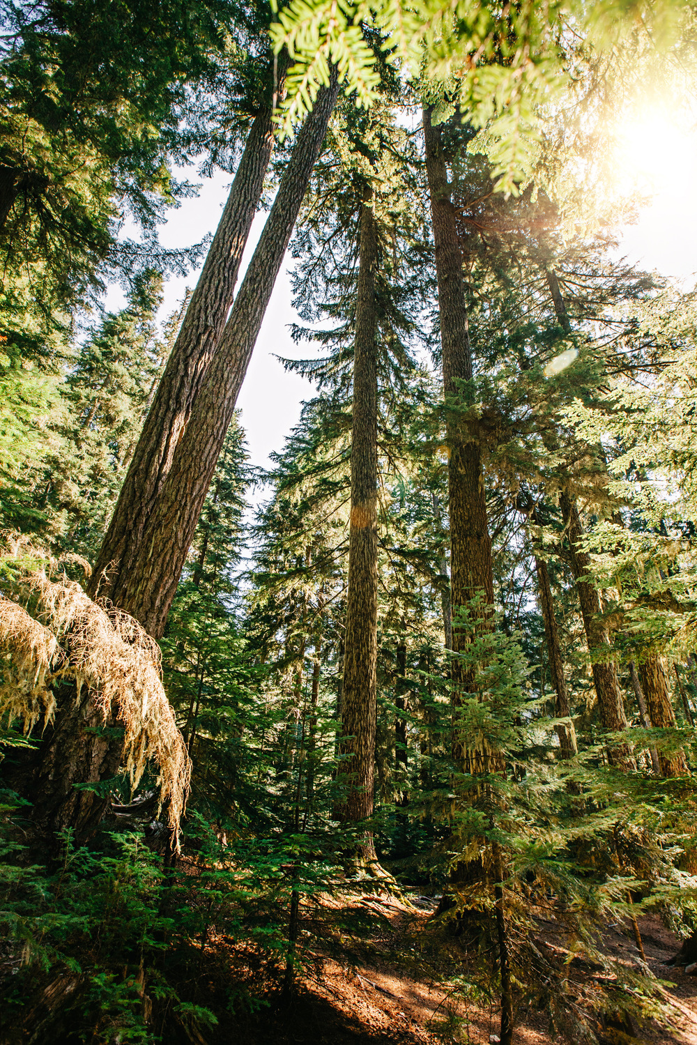 CindyGiovagnoli_MountRainier_Olympic_NationalPark_HohRainforest_Washington_MRNP_Camping-020.jpg