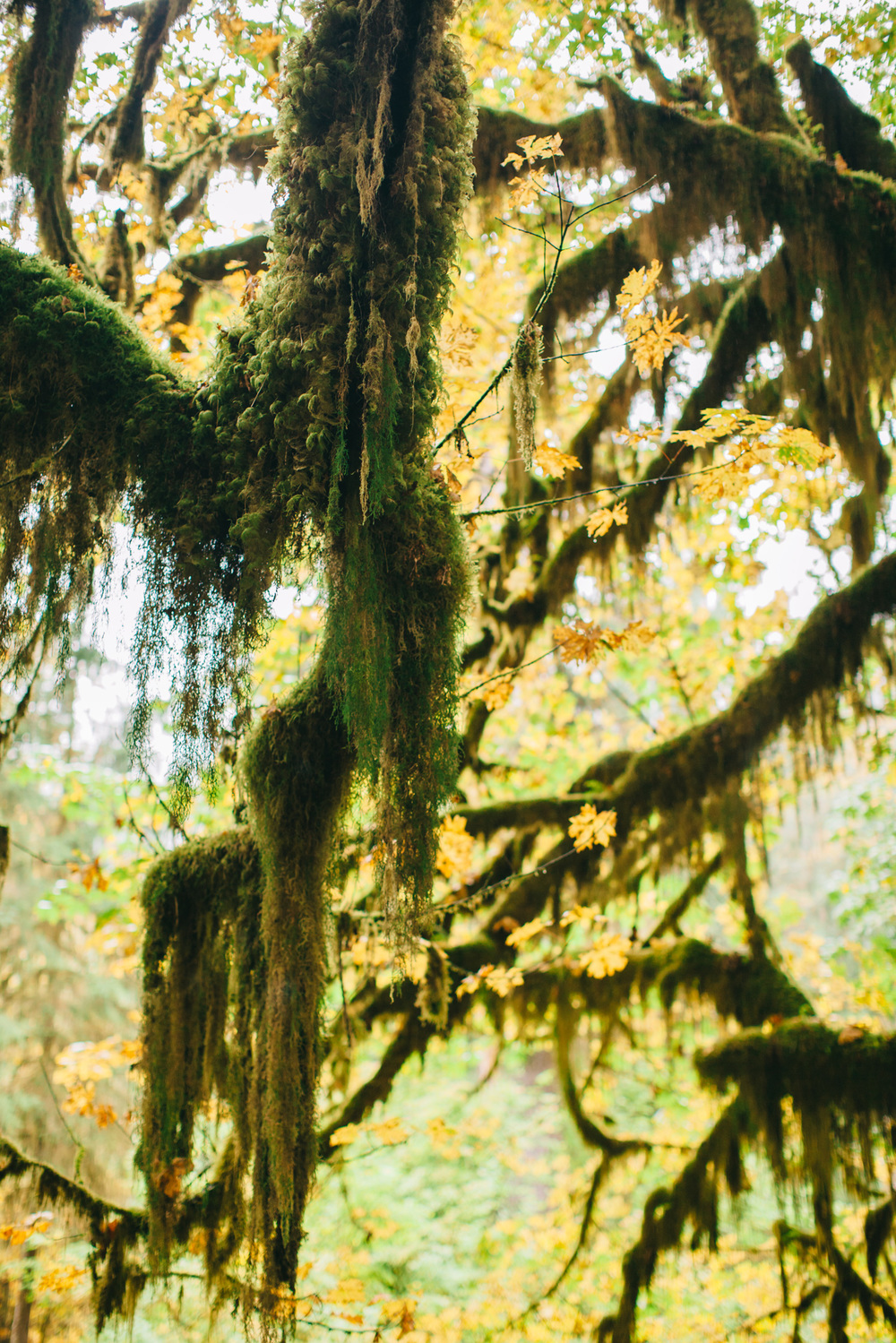 CindyGiovagnoli_MountRainier_Olympic_NationalPark_HohRainforest_Washington_MRNP_Camping-037.jpg