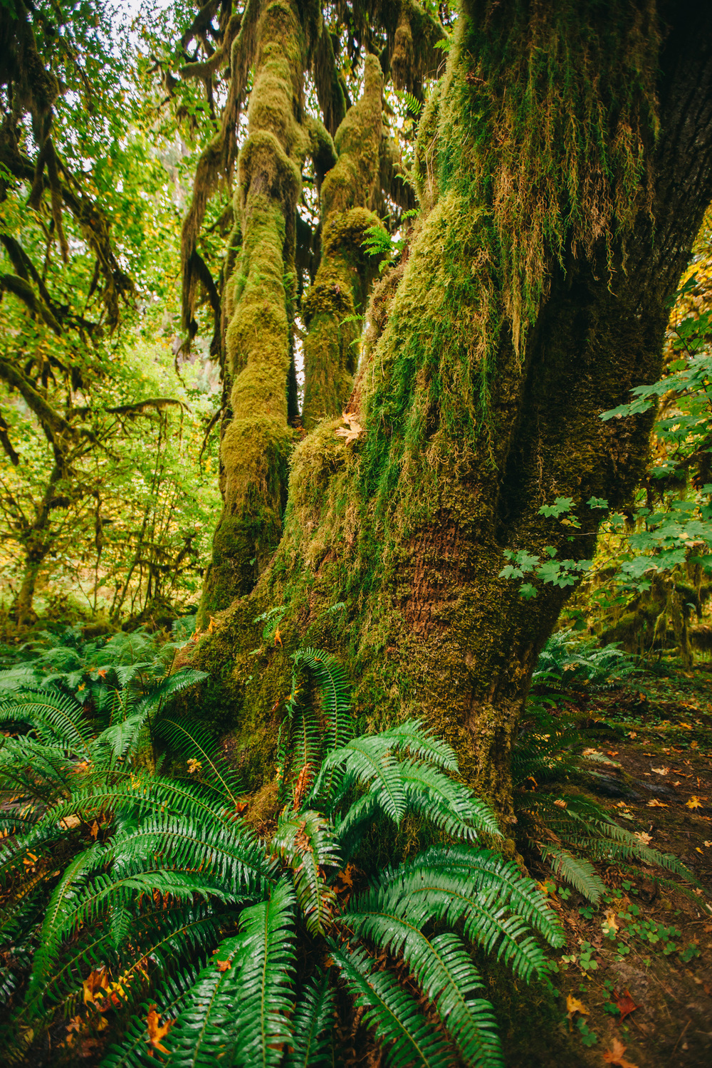 CindyGiovagnoli_MountRainier_Olympic_NationalPark_HohRainforest_Washington_MRNP_Camping-040.jpg