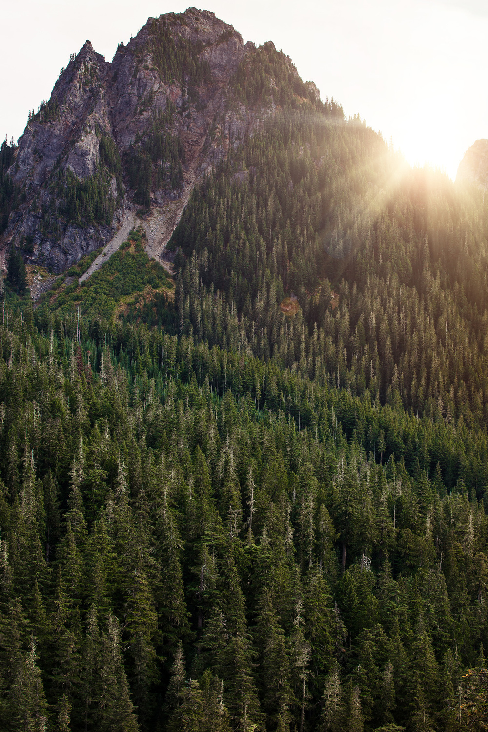 CindyGiovagnoli_MountRainier_Olympic_NationalPark_HohRainforest_Washington_MRNP_Camping-049.jpg