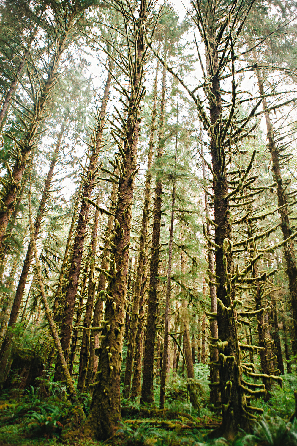 CindyGiovagnoli_MountRainier_Olympic_NationalPark_HohRainforest_Washington_MRNP_Camping-065.jpg