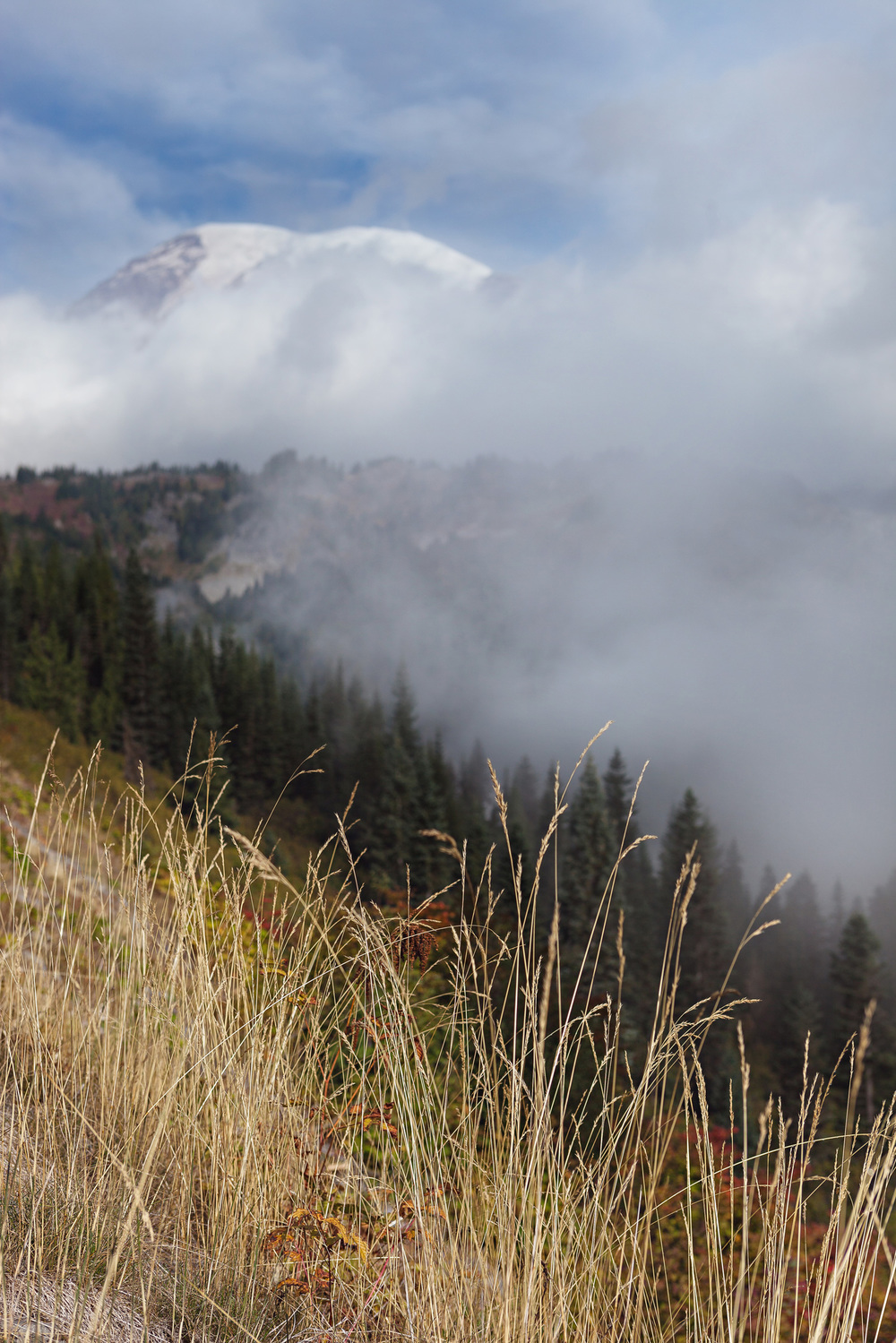 CindyGiovagnoli_MountRainier_Olympic_NationalPark_HohRainforest_Washington_MRNP_Camping-080.jpg