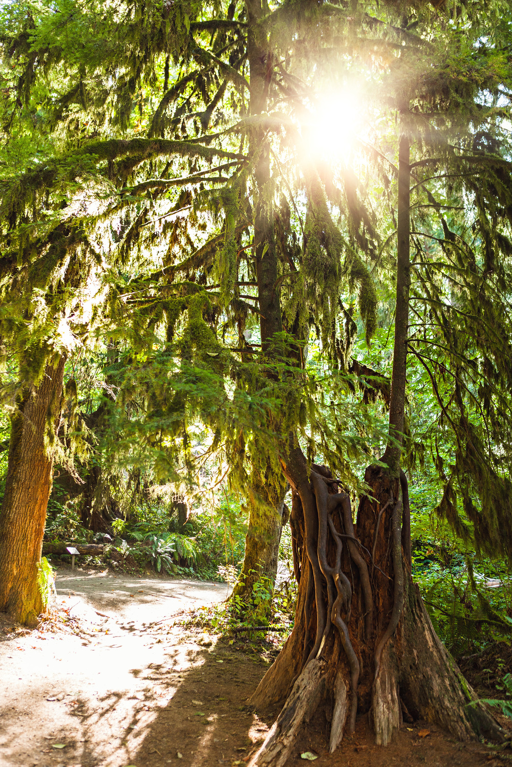 CindyGiovagnoli_MountRainier_Olympic_NationalPark_HohRainforest_Washington_MRNP_Camping-081.jpg