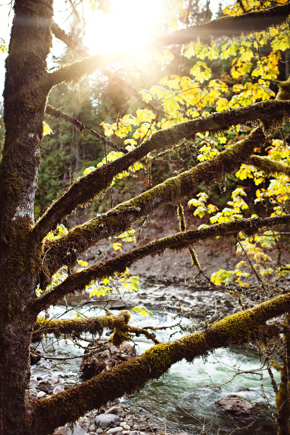 CindyGiovagnoli_MountRainier_Olympic_NationalPark_HohRainforest_Washington_MRNP_Camping-086.jpg