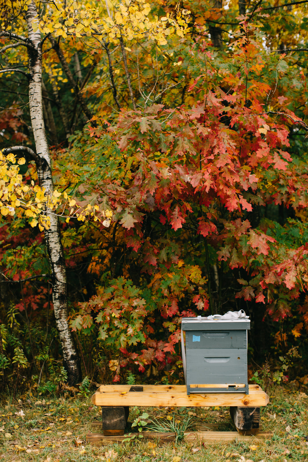 CindyGiovagnoli_Wiscasset_Maine_farm_vanlife_fall_autumn-021.jpg