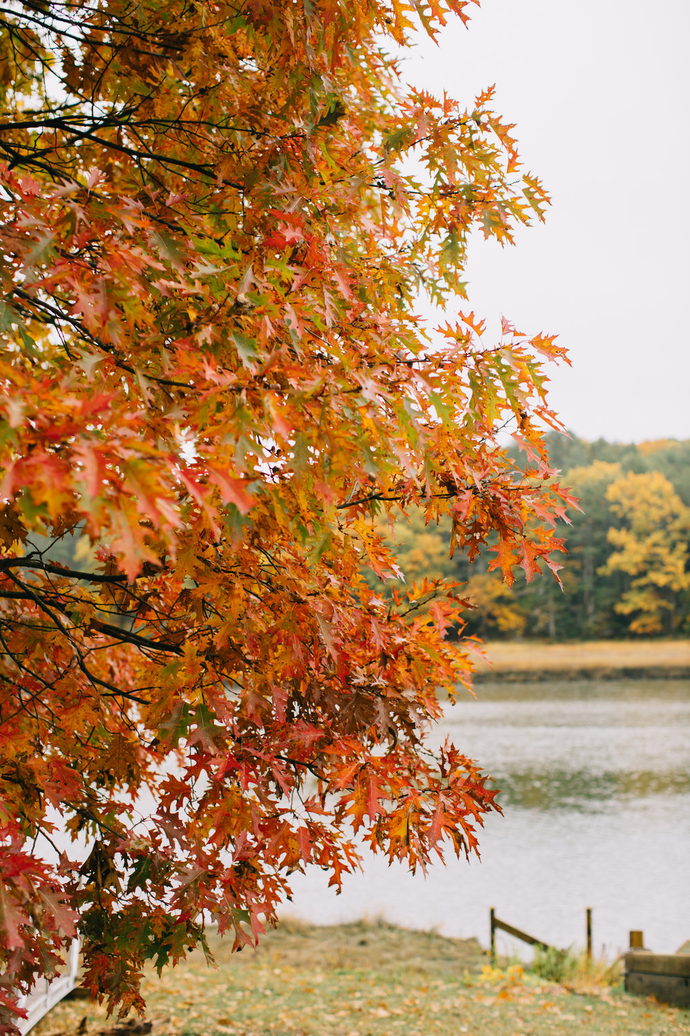 CindyGiovagnoli_Wiscasset_Maine_farm_vanlife_fall_autumn-028.jpg