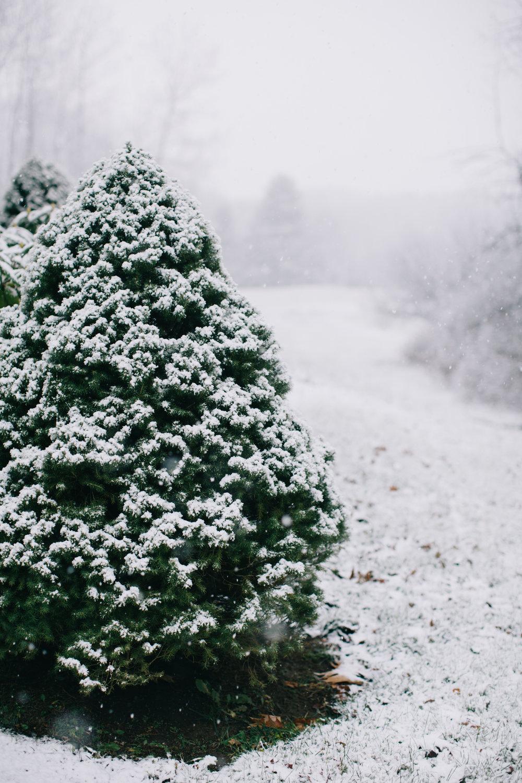 CindyGiovagnoli_Maine_Snow_home-003.jpg