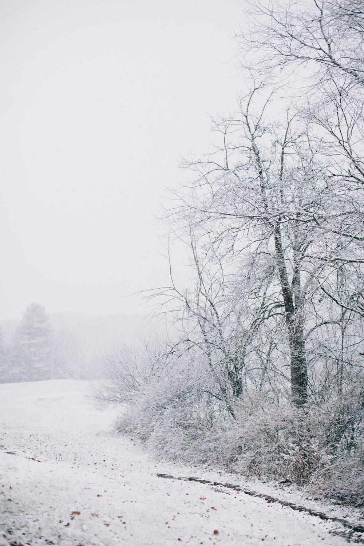 CindyGiovagnoli_Maine_Snow_home-008.jpg