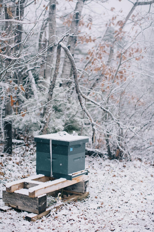 CindyGiovagnoli_Maine_Snow_home-020.jpg