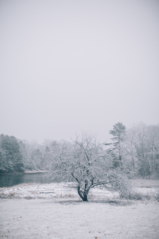 CindyGiovagnoli_Maine_Snow_home-023.jpg