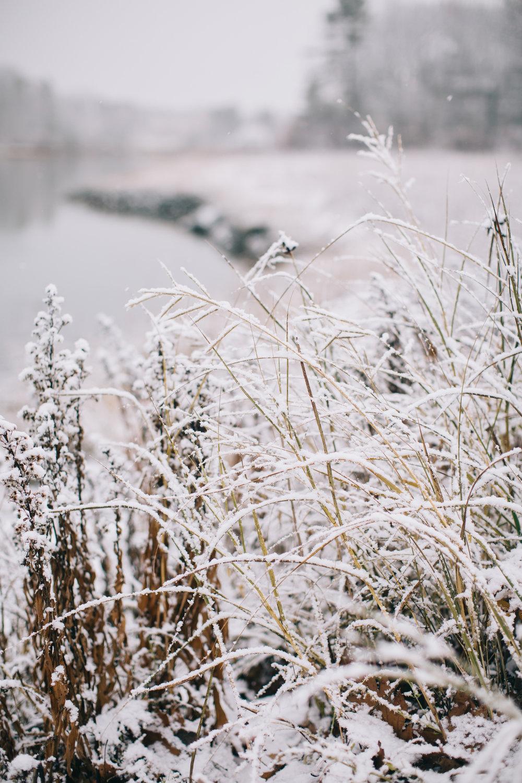 CindyGiovagnoli_Maine_Snow_home-030.jpg