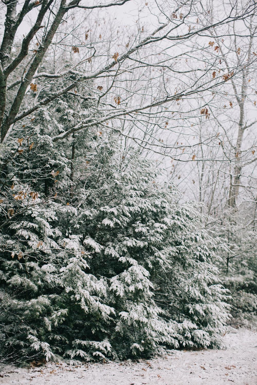 CindyGiovagnoli_Maine_Snow_home-029.jpg