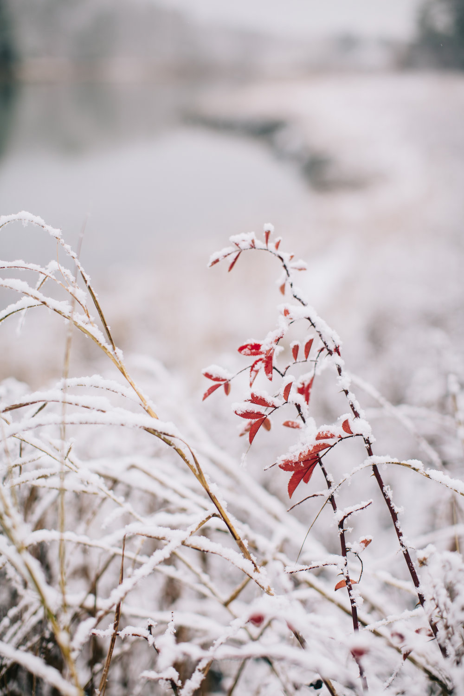 CindyGiovagnoli_Maine_Snow_home-036.jpg