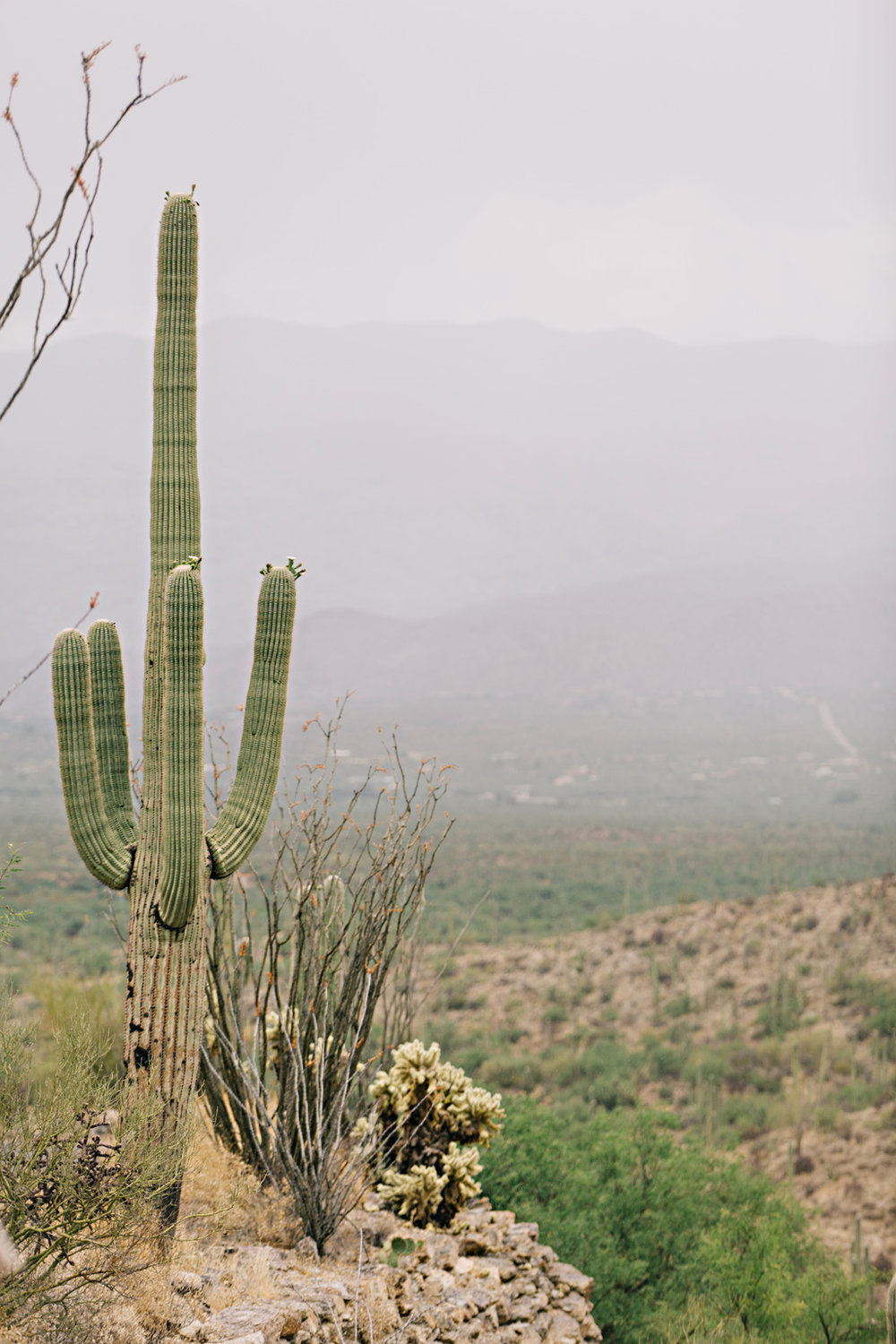CindyGiovagnoli_Saguaro_National_Park_Arizona_desert_cactus_bloom_flowers-012.jpg