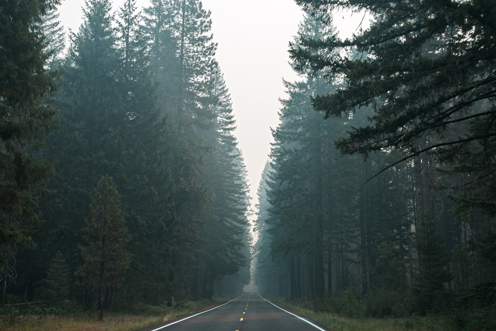 CindyGiovagnoli_Redwoods_CraterLake_MountRainier_PNW_National_Park_trees_camp_road_trip-001.jpg