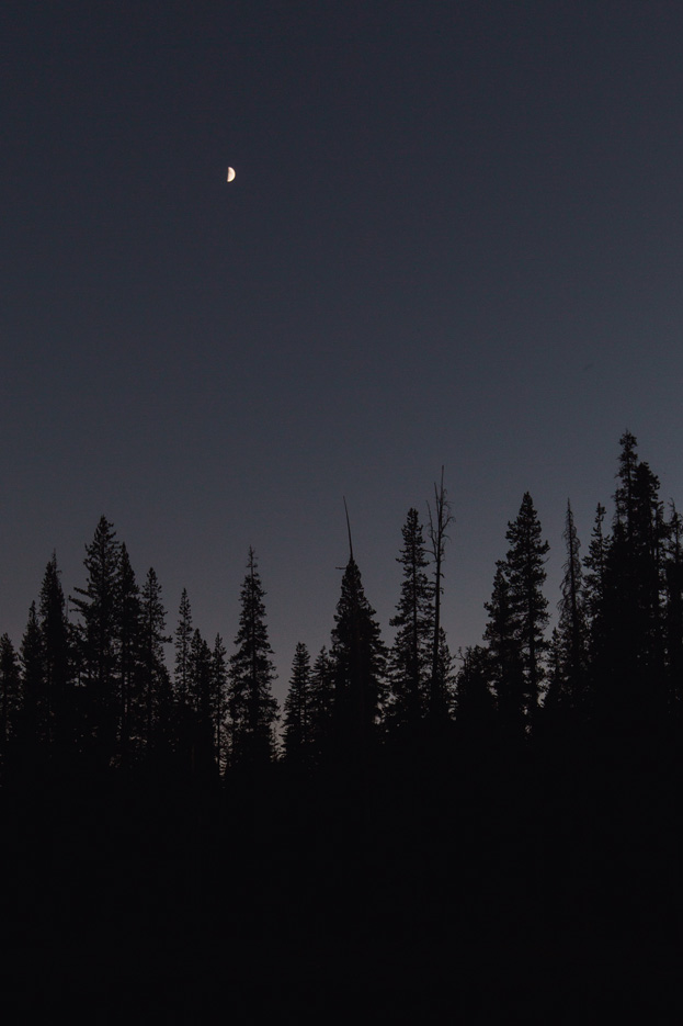 CindyGiovagnoli_Redwoods_CraterLake_MountRainier_PNW_National_Park_trees_camp_road_trip-004.jpg