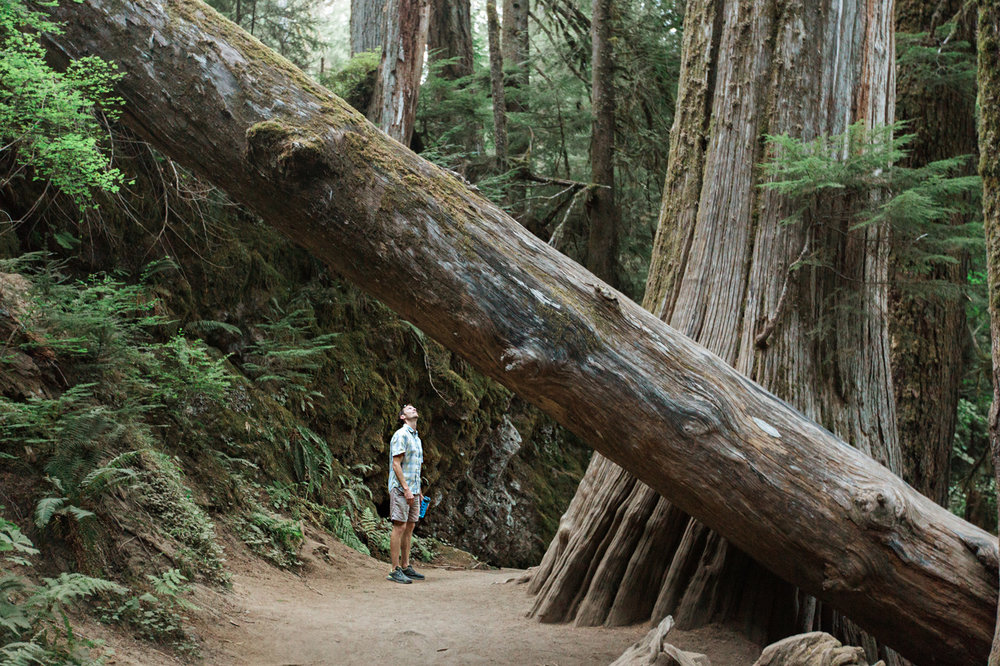 CindyGiovagnoli_Redwoods_CraterLake_MountRainier_PNW_National_Park_trees_camp_road_trip-008.jpg