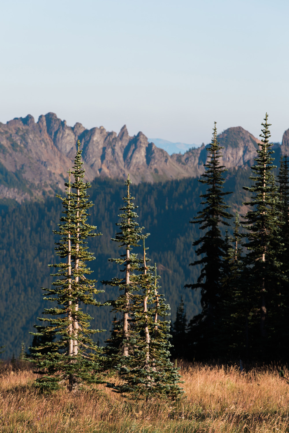 CindyGiovagnoli_Redwoods_CraterLake_MountRainier_PNW_National_Park_trees_camp_road_trip-009.jpg