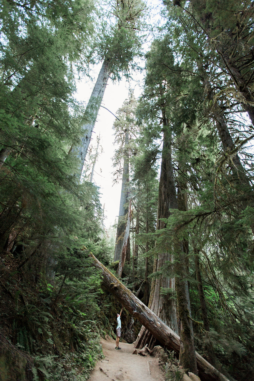 CindyGiovagnoli_Redwoods_CraterLake_MountRainier_PNW_National_Park_trees_camp_road_trip-013.jpg
