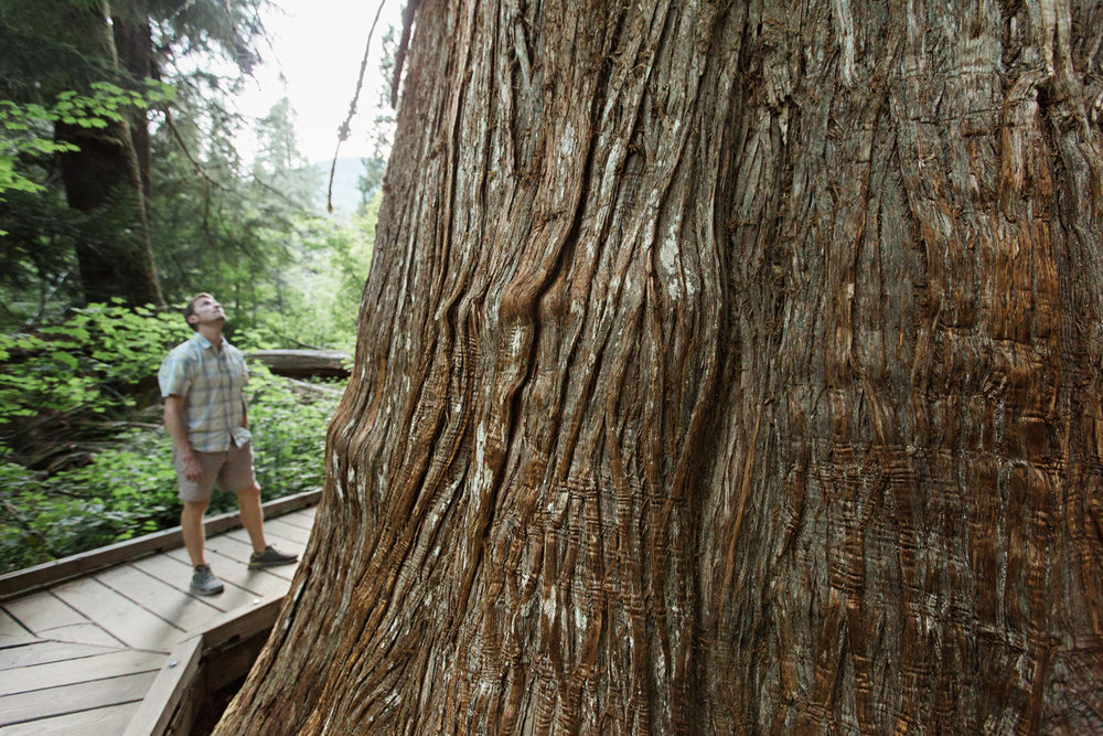CindyGiovagnoli_Redwoods_CraterLake_MountRainier_PNW_National_Park_trees_camp_road_trip-016.jpg