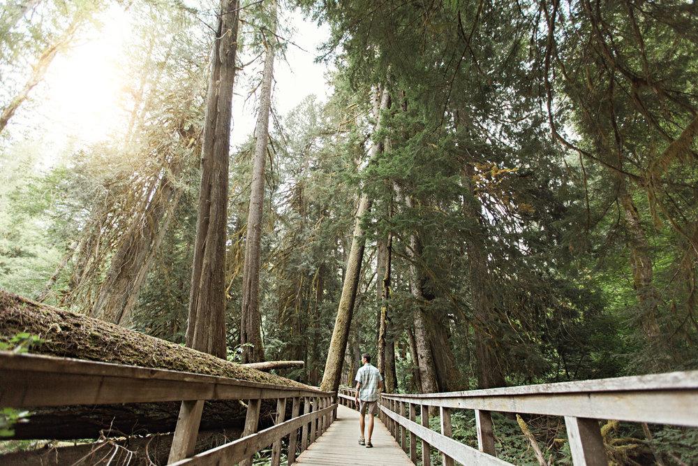 CindyGiovagnoli_Mount_Rainier_National_Park_Washington-002.jpg