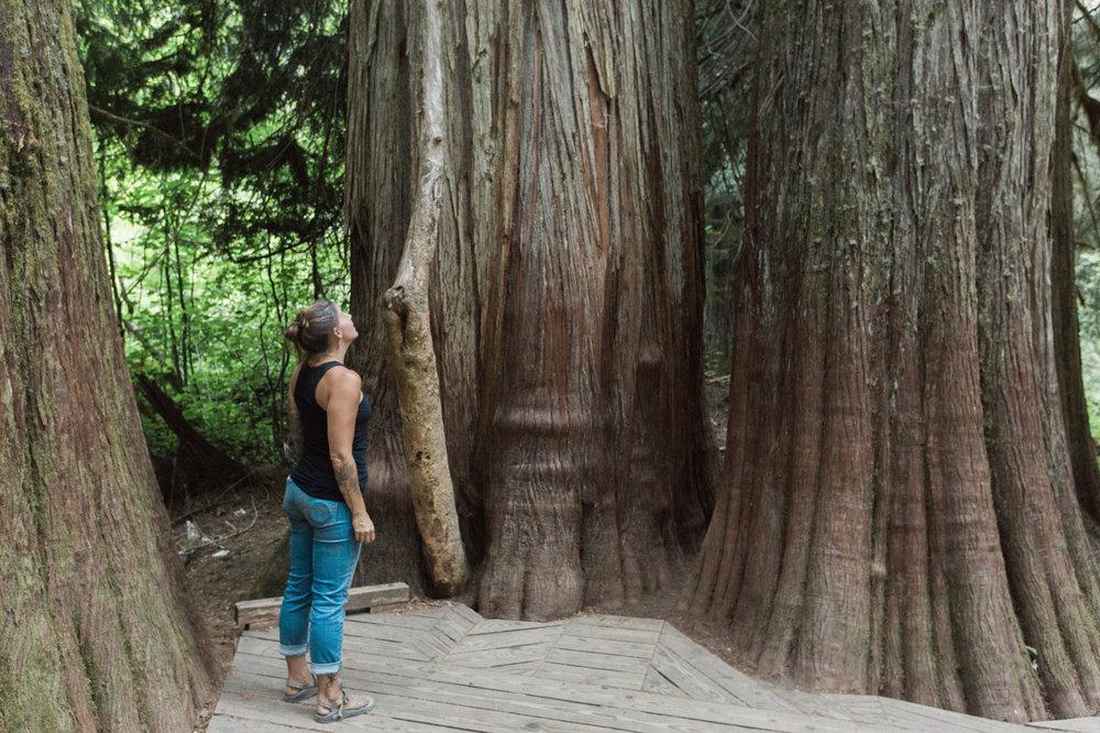 CindyGiovagnoli_Mount_Rainier_National_Park_Washington-007.jpg