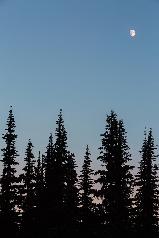 CindyGiovagnoli_Mount_Rainier_National_Park_Washington-020.jpg