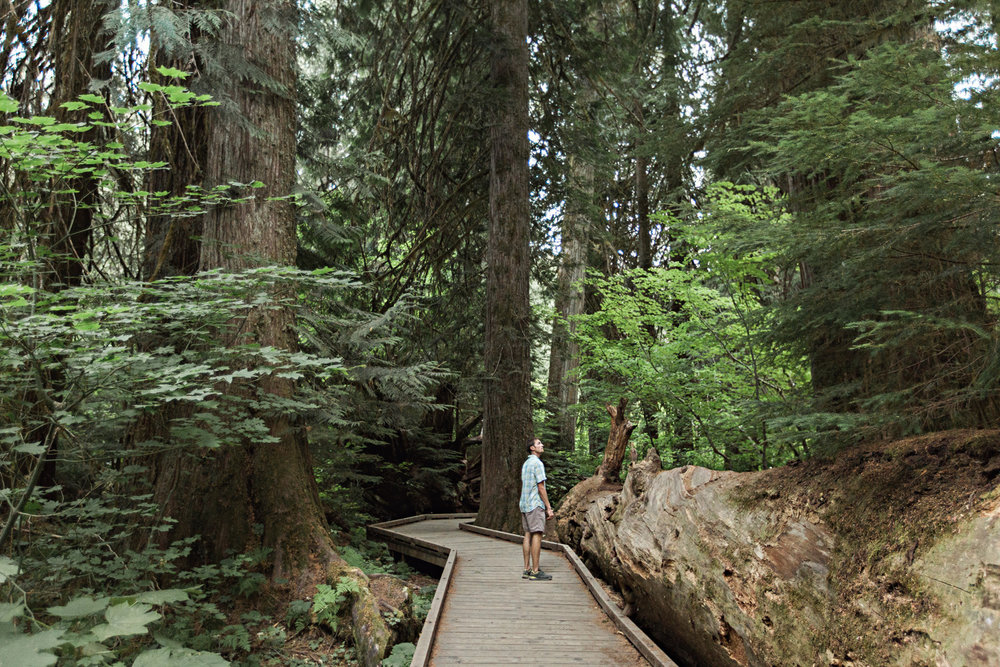 CindyGiovagnoli_Mount_Rainier_National_Park_Washington-022.jpg