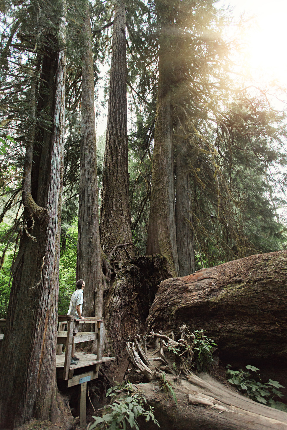 CindyGiovagnoli_Mount_Rainier_National_Park_Washington-028.jpg