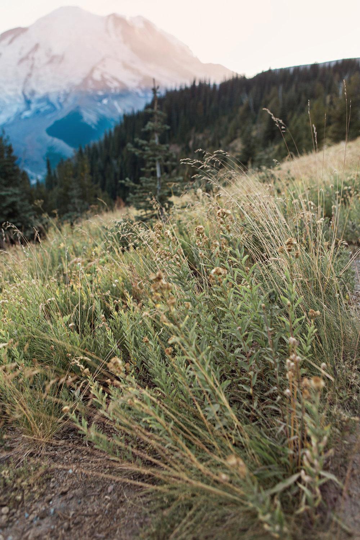 CindyGiovagnoli_Mount_Rainier_National_Park_Washington-027.jpg