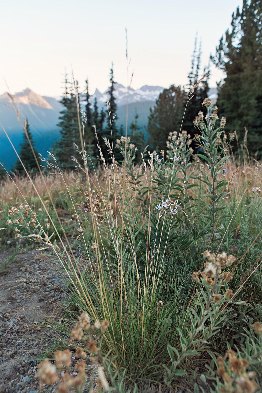 CindyGiovagnoli_Mount_Rainier_National_Park_Washington-031.jpg