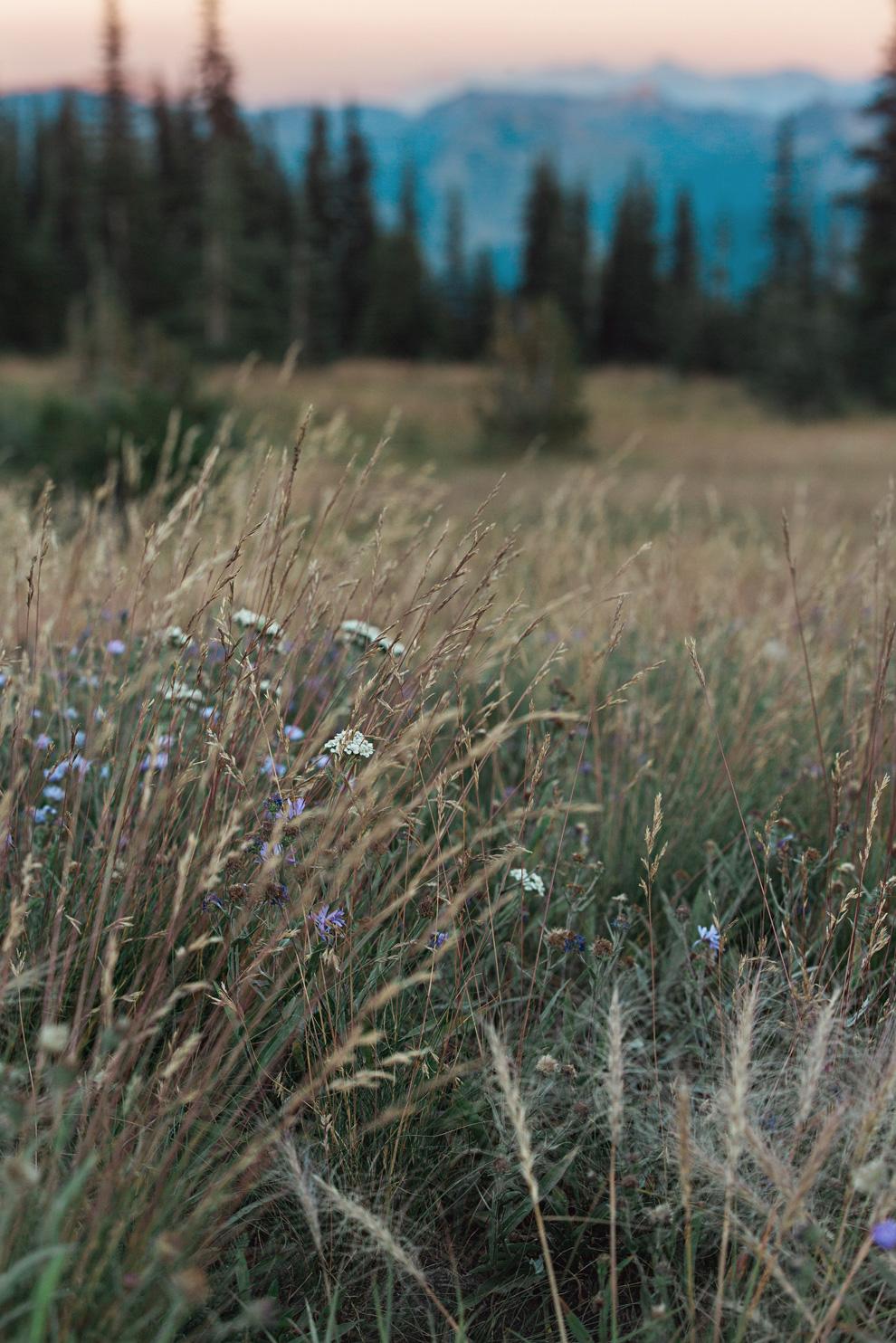 CindyGiovagnoli_Mount_Rainier_National_Park_Washington-033.jpg