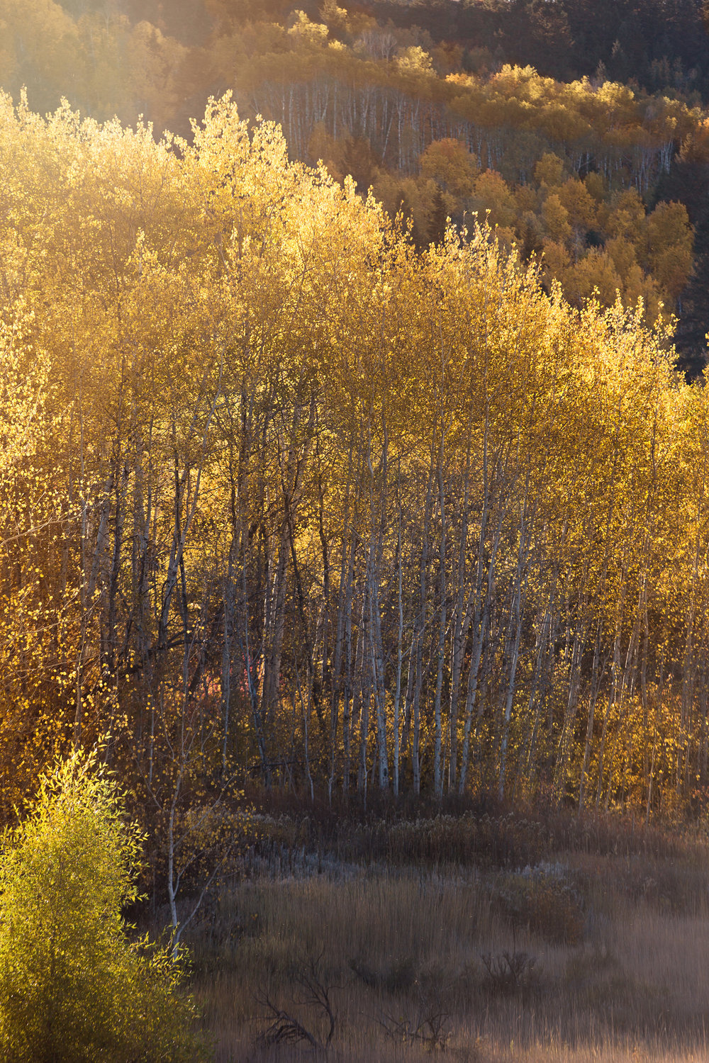 Cindy_Giovagnoli_Idaho_Wyoming_Grand_Teton_National_Park_autumn_aspens_camping_mountains-010.jpg