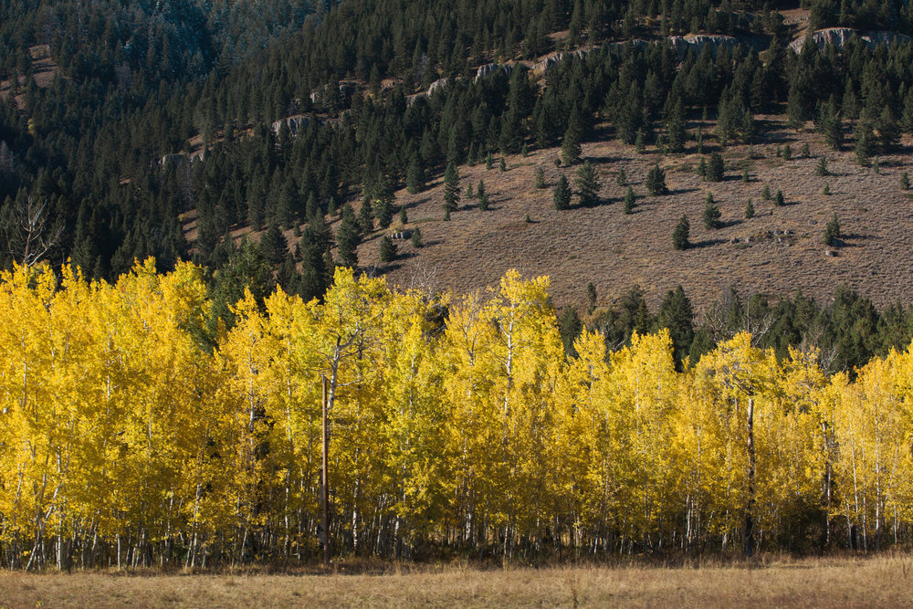 Cindy_Giovagnoli_Idaho_Wyoming_Grand_Teton_National_Park_autumn_aspens_camping_mountains-021.jpg