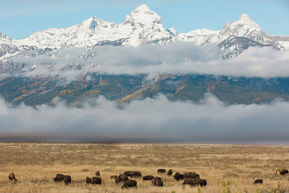CindyGiovagnoli_Grand_Teton_National_Park_mountains_Bison_Autumn_Wyoming_Mormon_Row_aspens_fall_outdoor_photographer-010.jpg