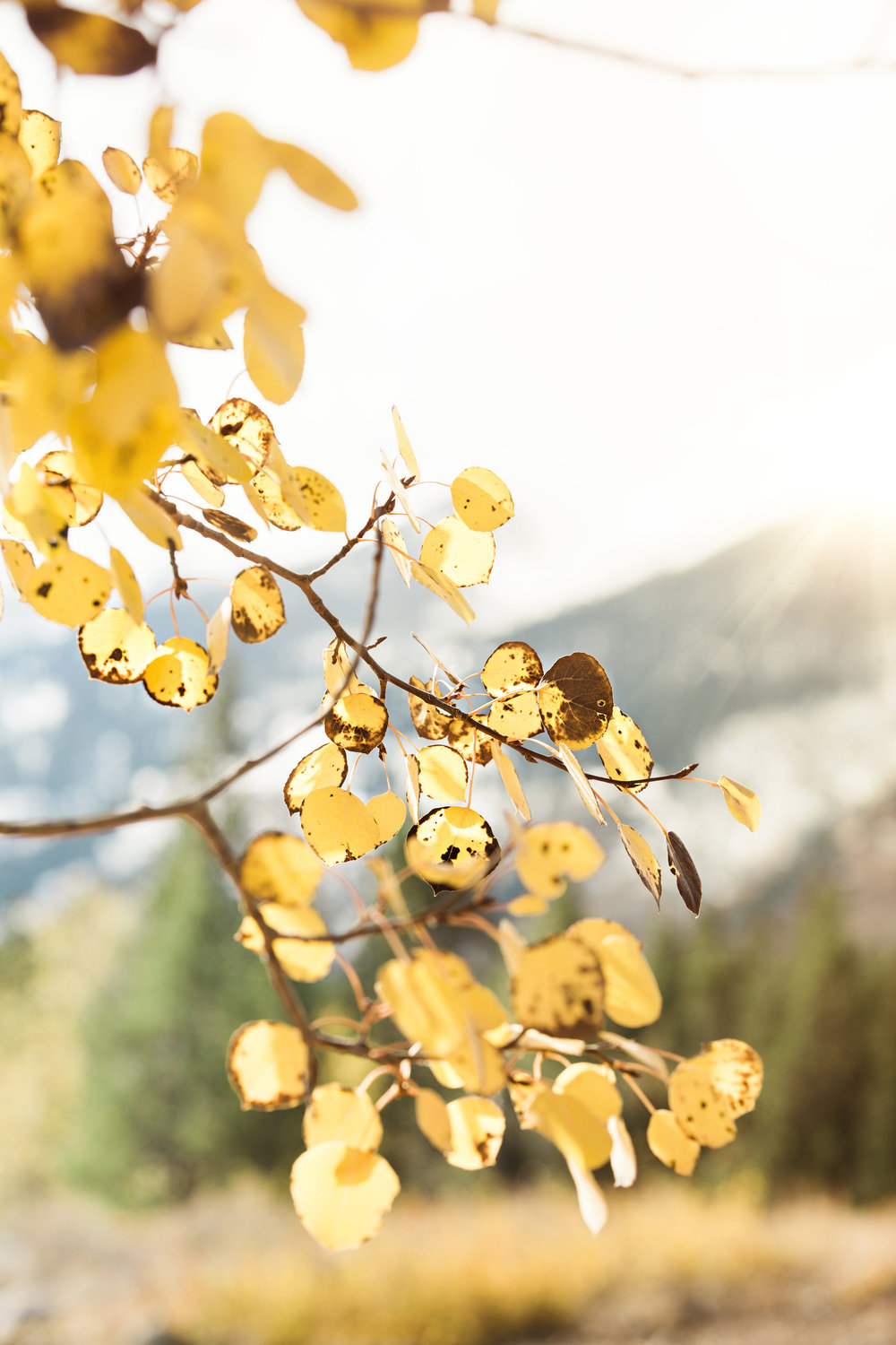 CindyGiovagnoli_Grand_Teton_National_Park_mountains_Bison_Autumn_Wyoming_Mormon_Row_aspens_fall_outdoor_photographer-012.jpg