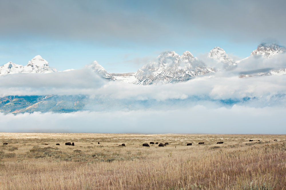 CindyGiovagnoli_Grand_Teton_National_Park_mountains_Bison_Autumn_Wyoming_Mormon_Row_aspens_fall_outdoor_photographer-042.jpg