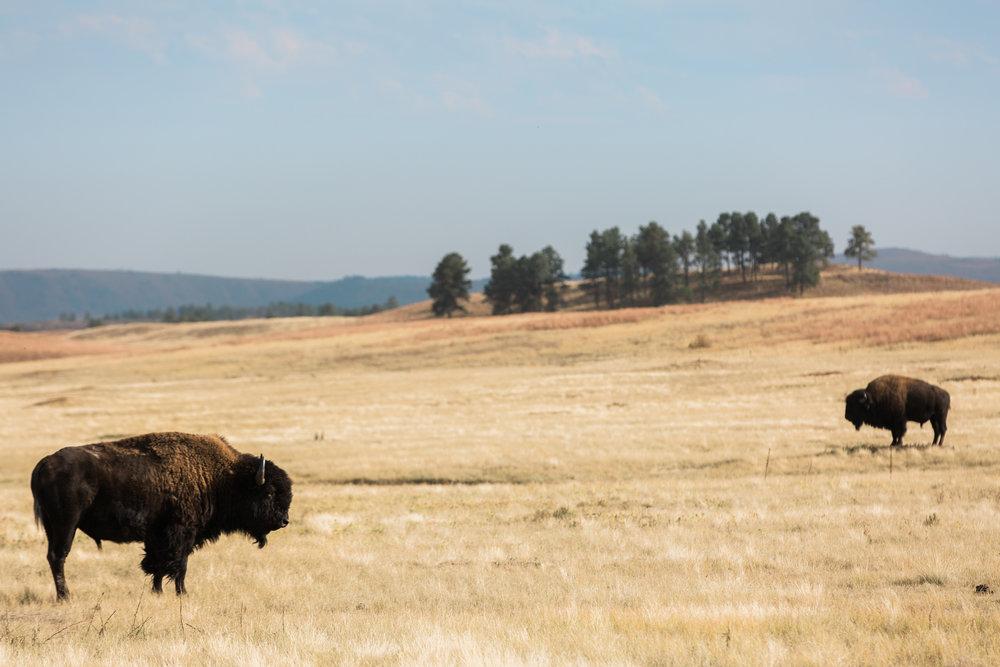 CindyGiovagnoli_South_Dakota_Wind_Cave_Badland_National_Park_Mount_Rushmore_bison_pronghorn_hiking_prairie-001.jpg