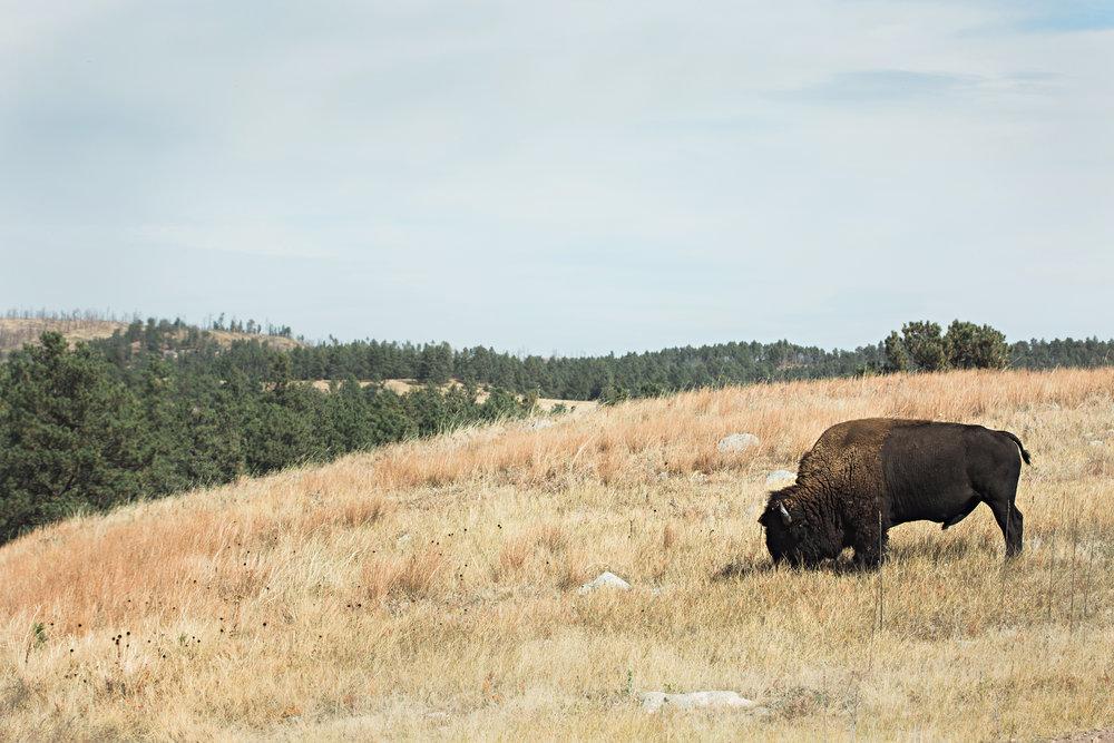 CindyGiovagnoli_South_Dakota_Wind_Cave_Badland_National_Park_Mount_Rushmore_bison_pronghorn_hiking_prairie-010.jpg