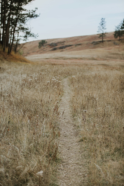 CindyGiovagnoli_South_Dakota_Wind_Cave_Badland_National_Park_Mount_Rushmore_bison_pronghorn_hiking_prairie-012.jpg