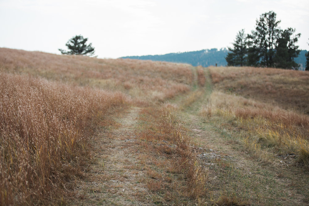 CindyGiovagnoli_South_Dakota_Wind_Cave_Badland_National_Park_Mount_Rushmore_bison_pronghorn_hiking_prairie-014.jpg