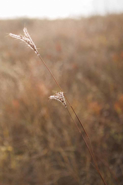 CindyGiovagnoli_South_Dakota_Wind_Cave_Badland_National_Park_Mount_Rushmore_bison_pronghorn_hiking_prairie-018.jpg