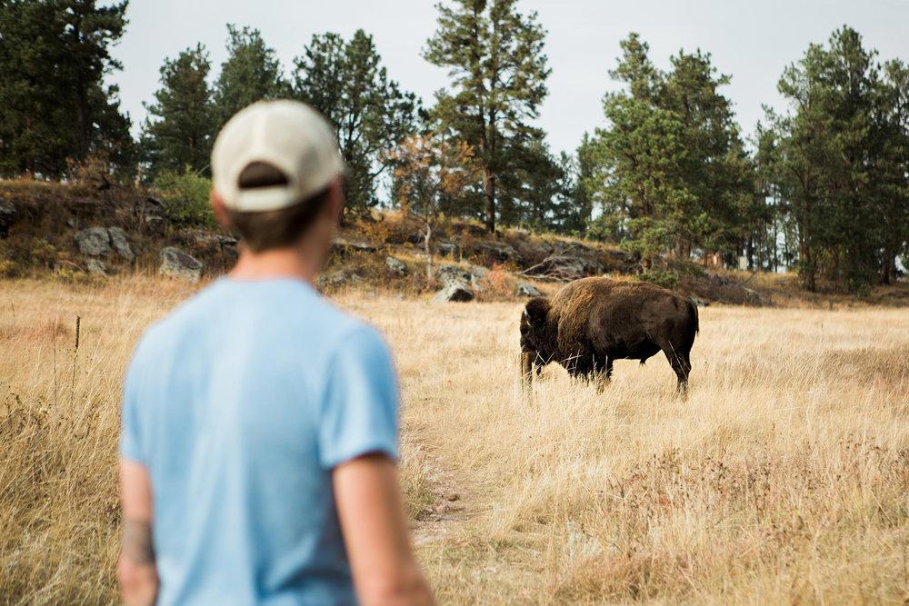 CindyGiovagnoli_South_Dakota_Wind_Cave_Badland_National_Park_Mount_Rushmore_bison_pronghorn_hiking_prairie-022.jpg