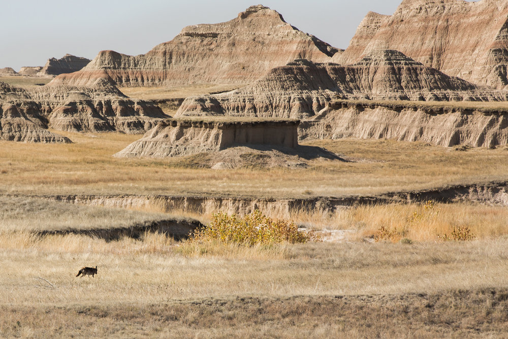 CindyGiovagnoli_South_Dakota_Wind_Cave_Badland_National_Park_Mount_Rushmore_bison_pronghorn_hiking_prairie-029.jpg