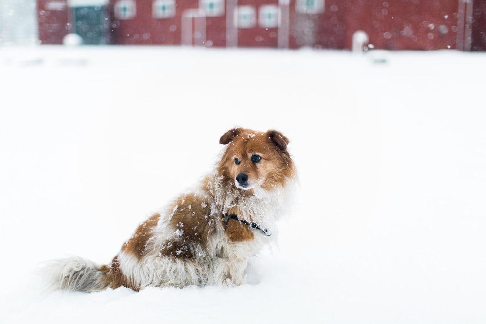 CindyGiovagnoli_New_Hampshire_New_England_snow_winter-004.jpg