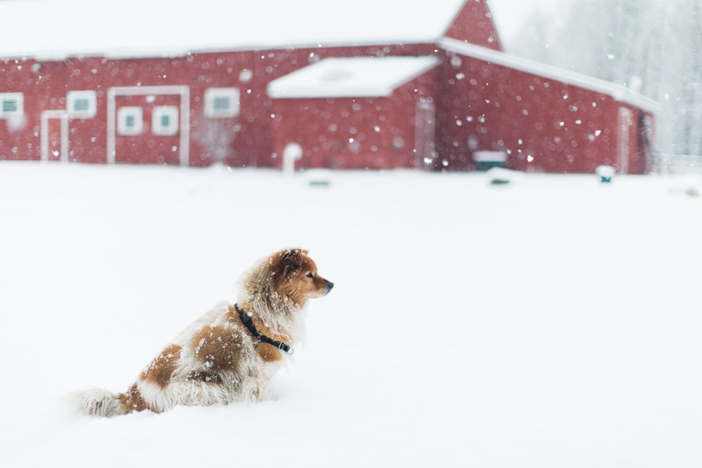 CindyGiovagnoli_New_Hampshire_New_England_snow_winter-005.jpg