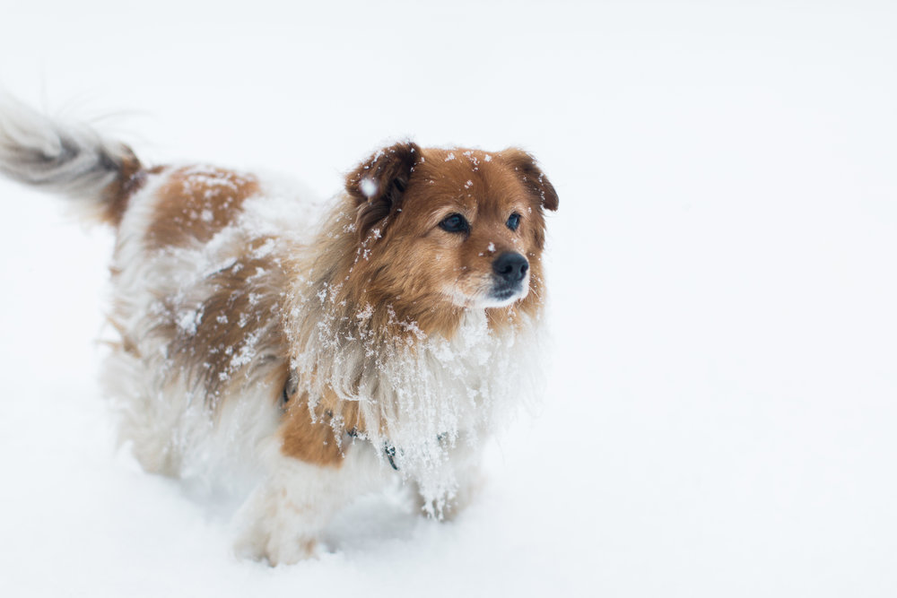 CindyGiovagnoli_New_Hampshire_New_England_snow_winter-008.jpg