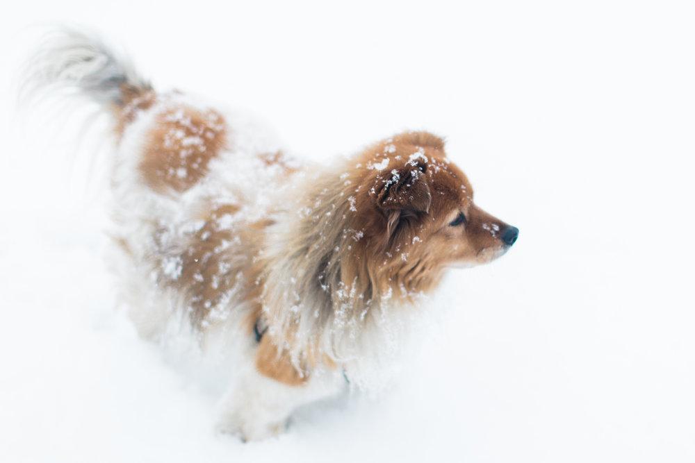 CindyGiovagnoli_New_Hampshire_New_England_snow_winter-010.jpg