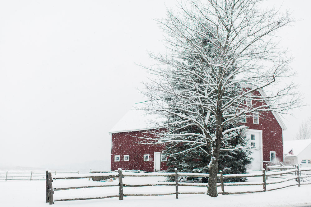 CindyGiovagnoli_New_Hampshire_New_England_snow_winter-019.jpg